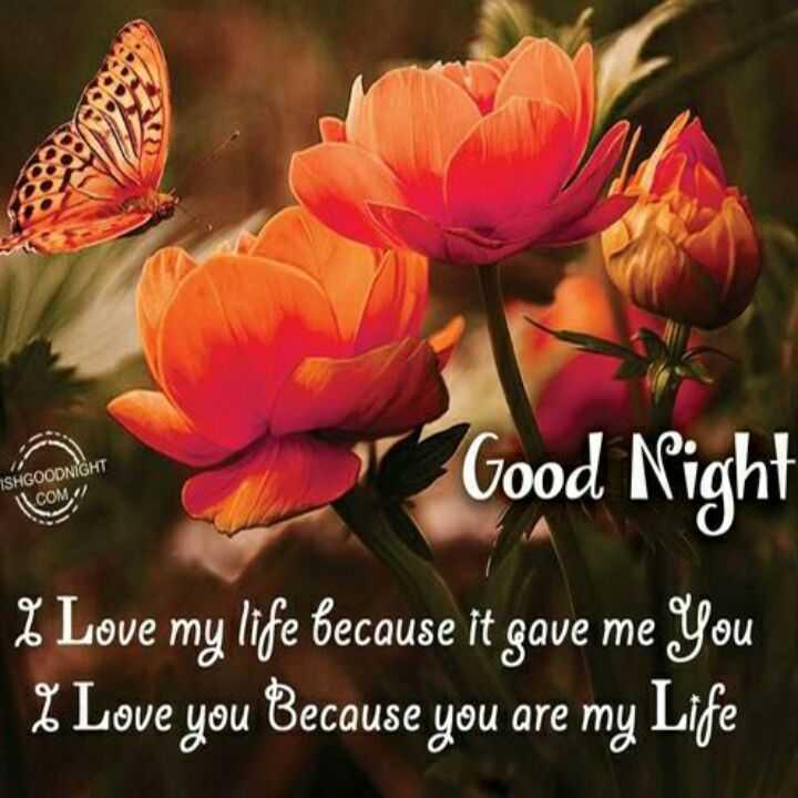 🌑শুভ রাত্রি - SHGOODNIGHT COM < / Good Night % Love my life because it gave me you 2 . Love you because you are my Life - ShareChat