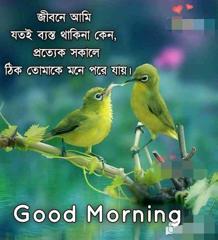 🌞সুপ্রভাত - জীবনে আমি যতই ব্যস্ত থাকিনা কেন , প্রত্যেক সকালে | ঠিক তােমাকে মনে পরে যায় । Good Morning - ShareChat