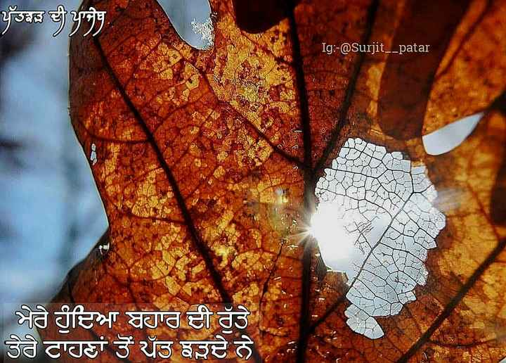 📜 ਕਵਿਤਾਵਾਂ - ਪੱਤਝੜ ਦੀ ਪਾਜੇਬ Ig : - @ Surjit _ _ patar ਮੇਰੇ ਹੁੰਦਿਆ ਬਹਾਰ ਦੀ ਰੁੱਤੇ ਤੇਰੇ ਟਾਹਣਾਂ ਤੋਂ ਪਤੁ ਝੜਦੇ ਨੇ , - ShareChat