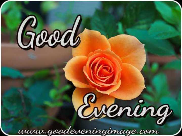 🌇ਗੁੱਡ ਈਵਨਿੰਗ - Good Evening www . goodeveningimage . com - ShareChat
