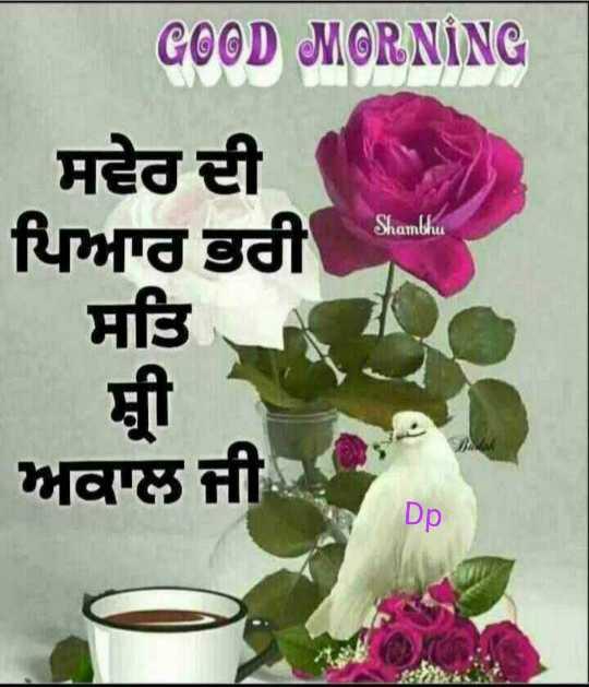 🌅 ਗੁੱਡ ਮੋਰਨਿੰਗ - GOOD MORNING ਸਵੇਰ ਦੀ ਪਿਆਰ ਭਰੀ ਸਤਿ . Shambhu ਸ਼ੀ ਅਕਾਲ ਜੀ - ShareChat