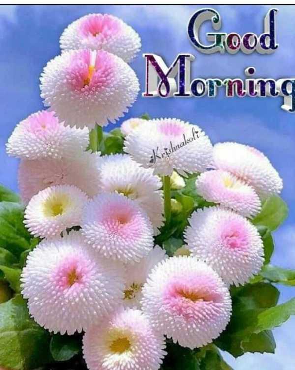 🌅 ਗੁੱਡ ਮੋਰਨਿੰਗ - Good Morning nakoli - ShareChat