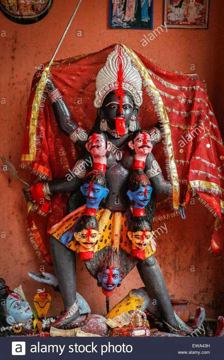 🌱ਮੇਰੇ ਘਰ ਦੇ ਪੌਦੇ - alamy NENA OG GB WWW als UWINATA * a alamy stock photo EWA43H www . alamy . com - ShareChat