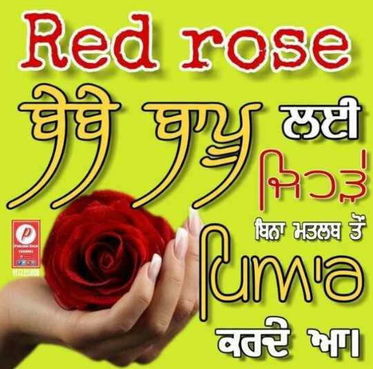 🌹 ਰਾਸ਼ਟਰੀ ਗੁਲਾਬ ਦਿਵਸ - Red rose ਬੇਬੇ ਬਾਊ ਜਿਹੜੇ ਬਿਨਾ ਮਤਲਬ ਤੋਂ uma ਕਰਦੇ ਆ - ShareChat