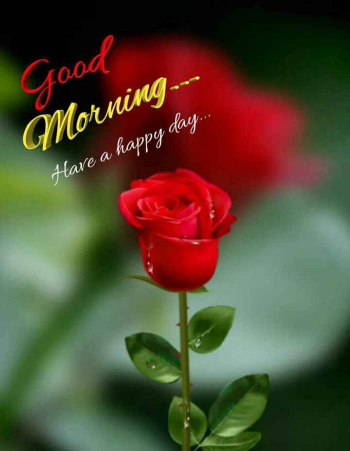 📱 ਵਟਸਐਪ ਸਟੇਟਸ - Good Morning Have a happy day . . . - ShareChat