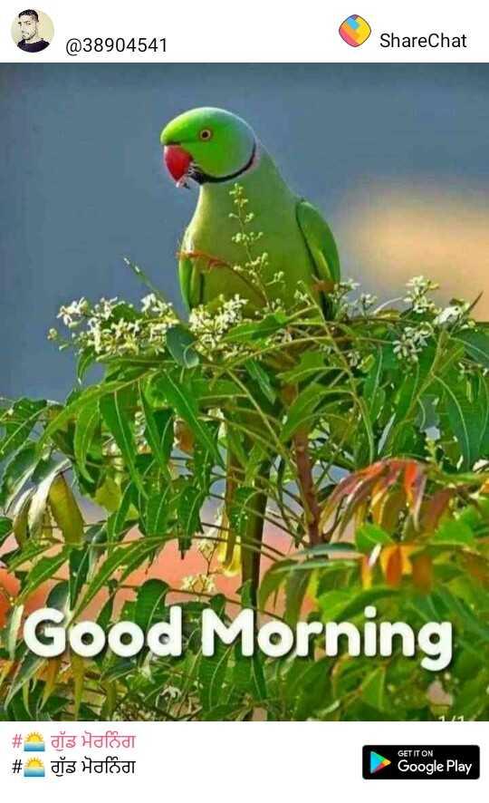 ਸਾਂਝੀਆ - @ 38904541 ShareChat IGood Morning # * dts Hafodt # dia Hafod GET IT ON Google Play - ShareChat