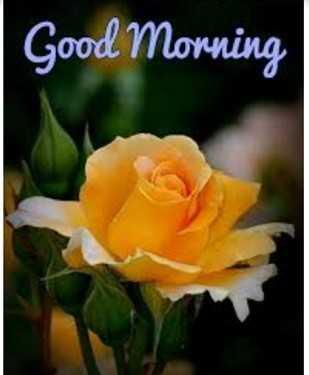ગુડ મોર્નિંગ - Good Morning - ShareChat