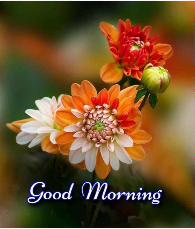 🎉 તહેવારો - Good Morning - ShareChat