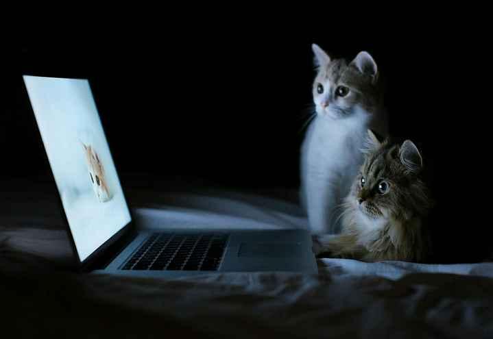 પ્રાણી જગત - ShareChat
