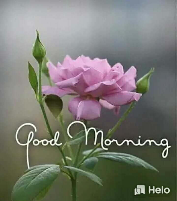 🌅 સુપ્રભાત 🙏 - d Morning - ShareChat