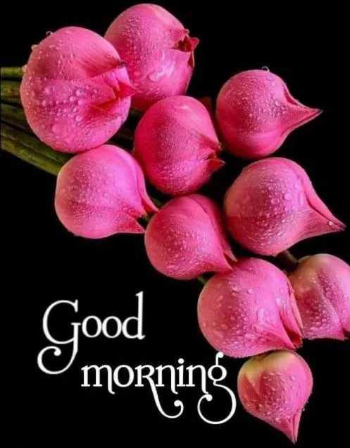 🌞காலை வணக்கம் - Good C morning - ShareChat
