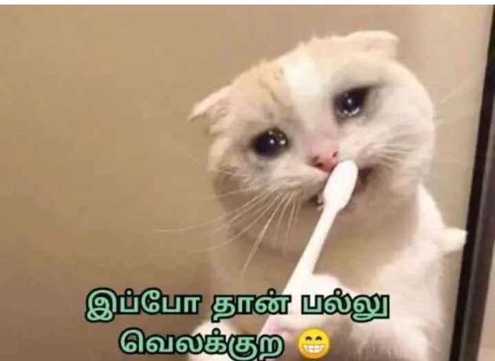 🤣 லொள்ளு - இப்போ தான் பல்லு வெலக்குற ஆ - ShareChat