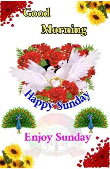 🌷 வாழ்த்து - Good Morning Hai Enjoy Sunday : - ShareChat
