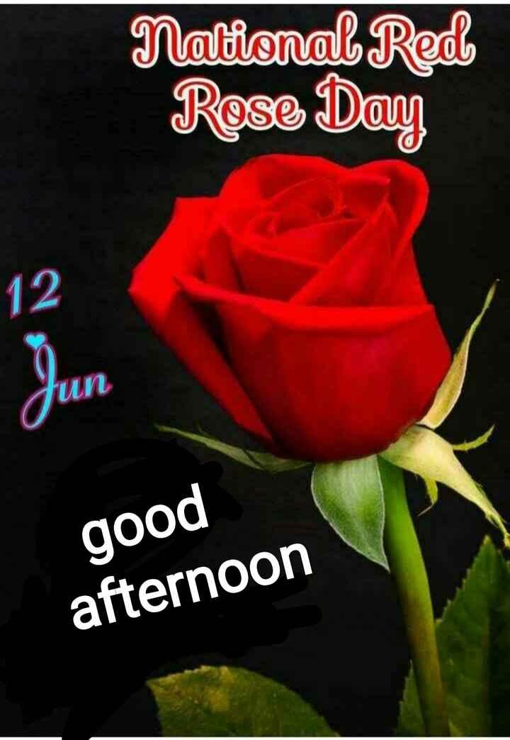 🌹ఎర్ర గులాబీ డే 🌹 - National Red Rose Day 12 un good afternoon - ShareChat