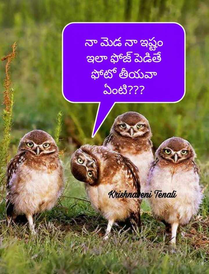 😆ఫన్నీ - నా మెడ నా ఇష్టం ఇలా ఫోజ్ పెడితే ఫోటో తీయవా ఏంటి ? ? ? Krishnaveni Tenali - ShareChat