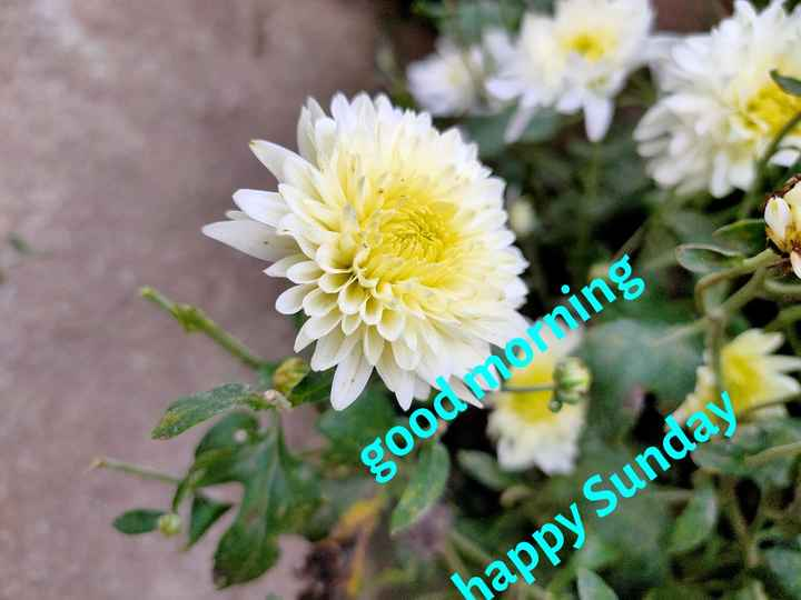 💐 శుభ శుభోదయం💐 - good morning happy Sunday - ShareChat