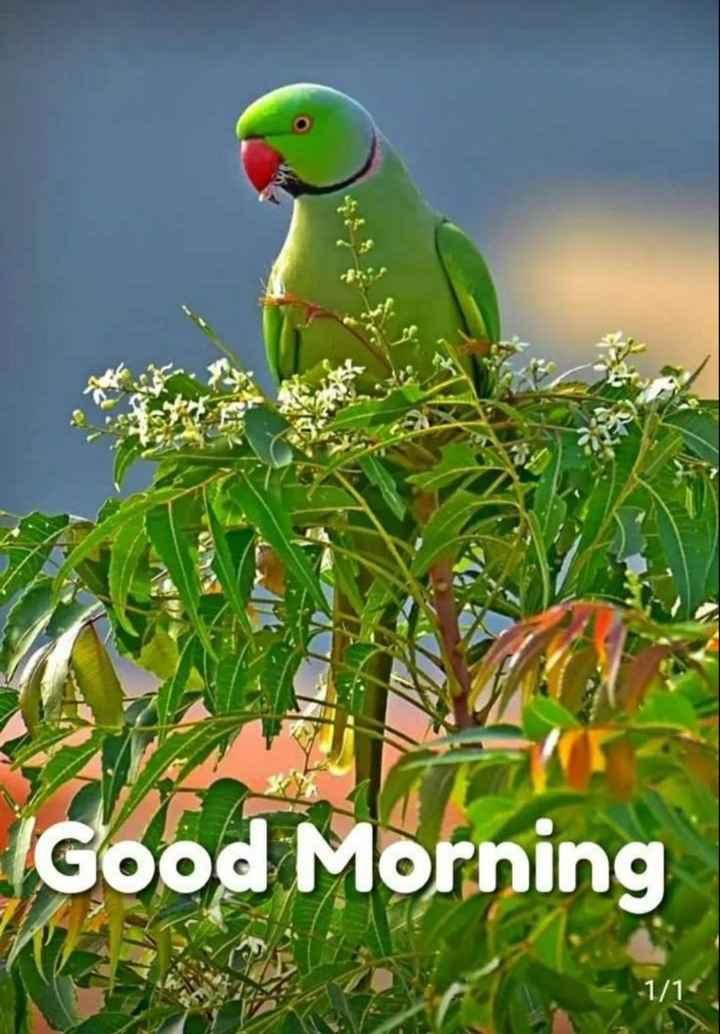 🙏శుభాకాంక్షలు - IGood Morning 1 / 1 - ShareChat