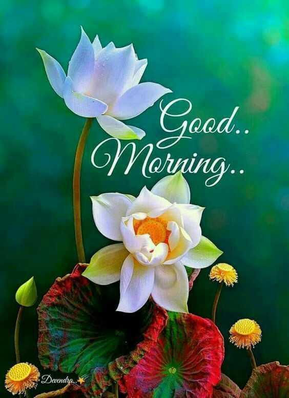 🙏శుభాకాంక్షలు - Good . . Morning . . Dandra . . - ShareChat