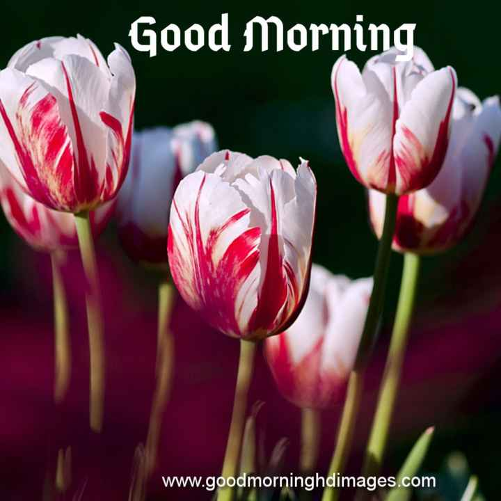 శుభొదయమ్ - Good Morning www . goodmorninghdimages . com - ShareChat