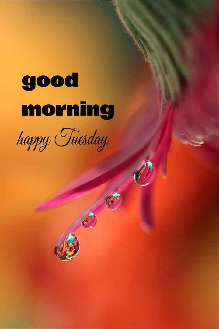 🌅శుభోదయం - good morning happy Tuesday - ShareChat