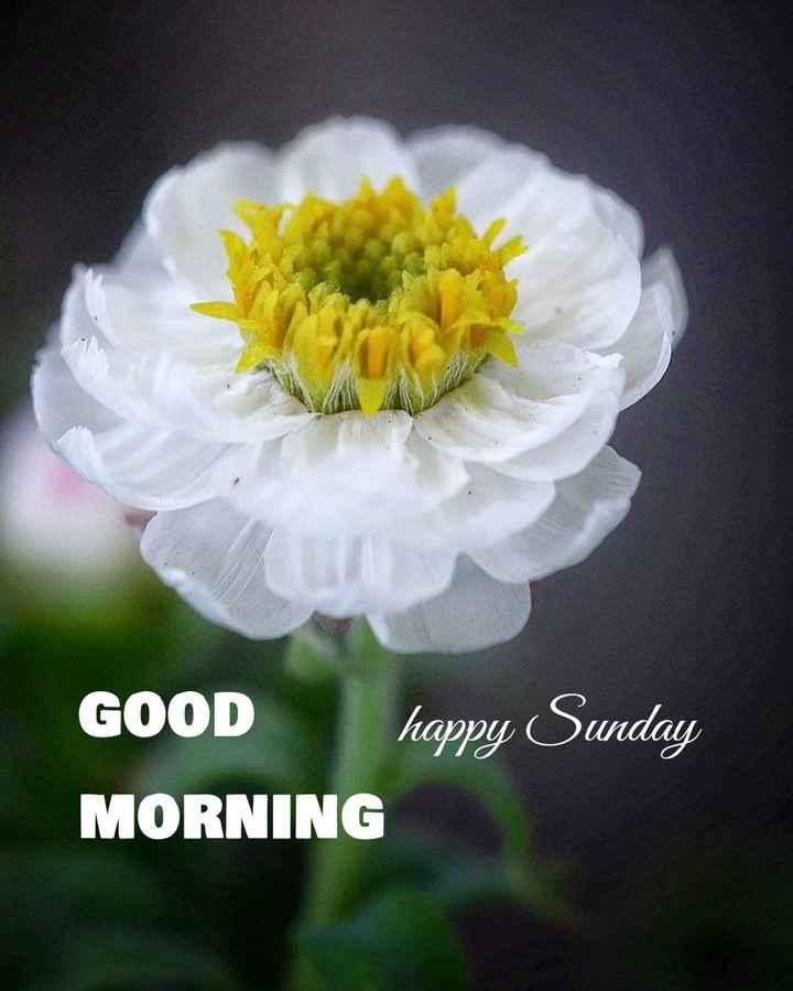 🌅శుభోదయం - GOOD happy Sunday MORNING - ShareChat