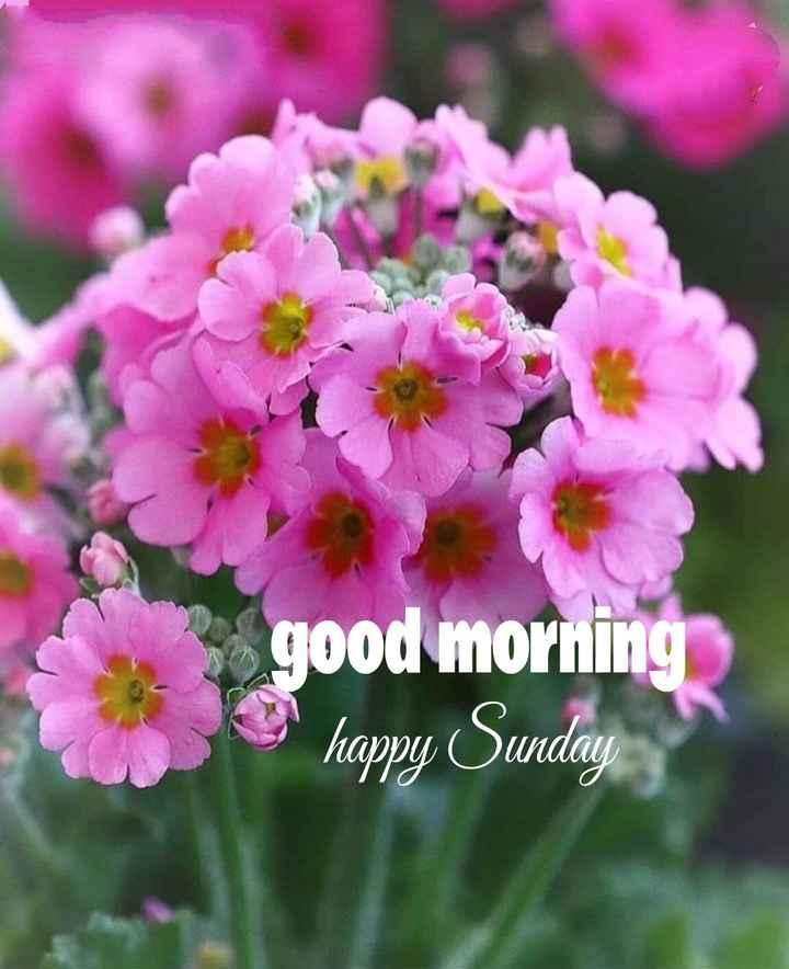 🌅శుభోదయం - good morning happy Sunday - ShareChat