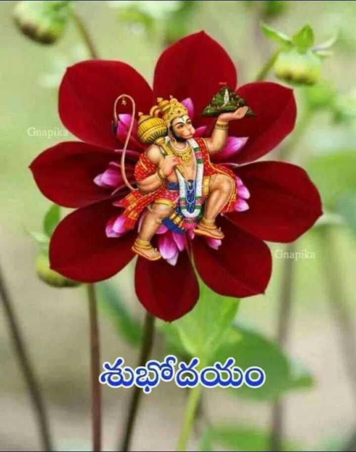 🌅శుభోదయం - Gnapika Gnapika శుభోదయం - ShareChat