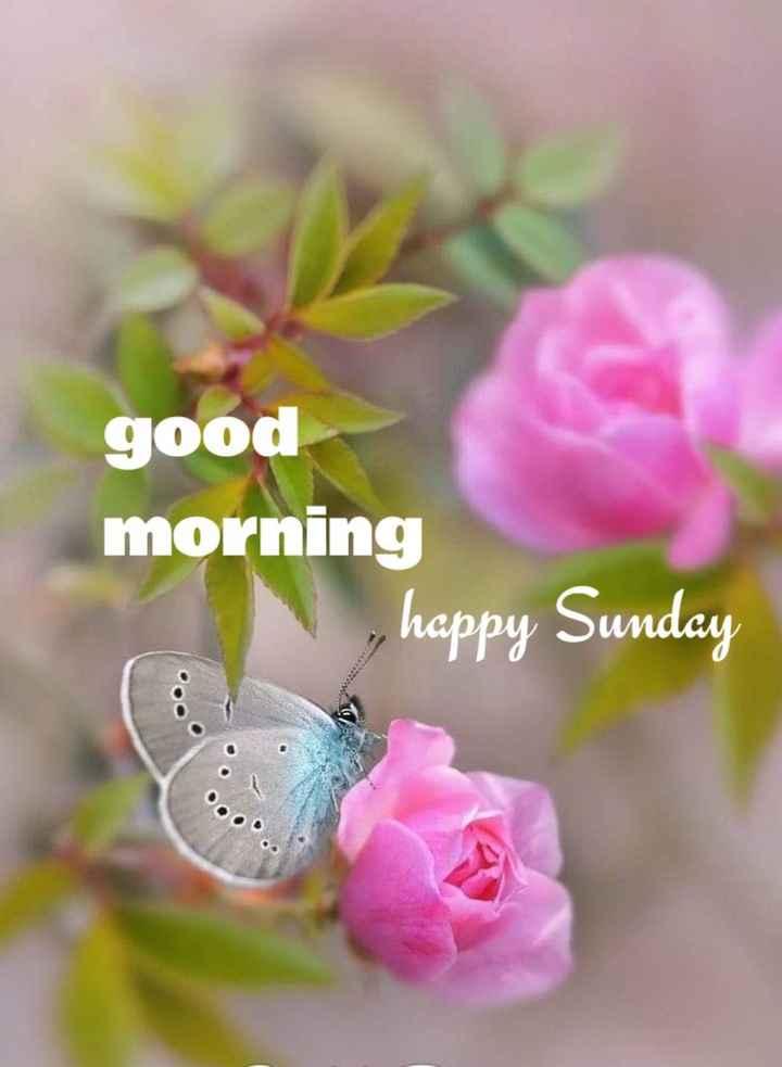 🌅శుభోదయం - good morning , happy Sunday - ShareChat
