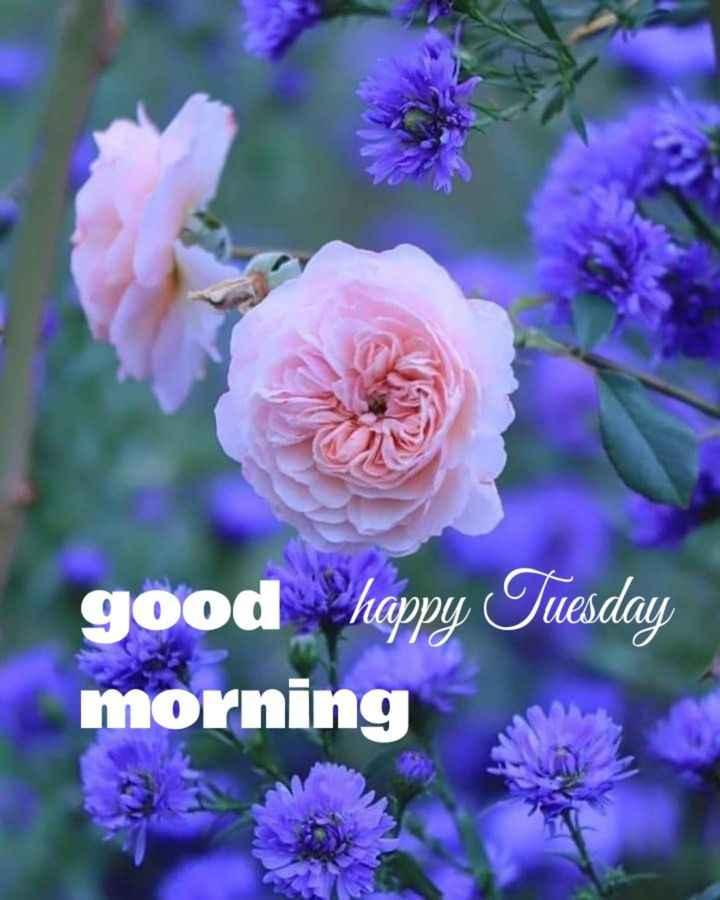 🌅శుభోదయం - good happy Tuesday morning - ShareChat