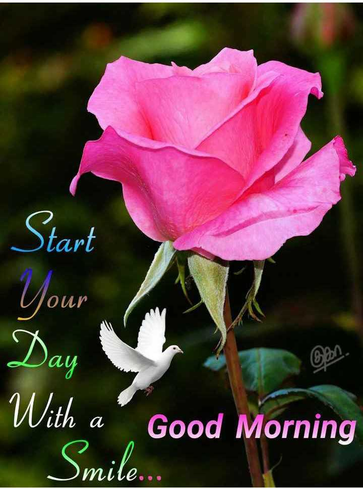 🌅శుభోదయం - Start your Day With a ' Good Morning mile . . . - ShareChat
