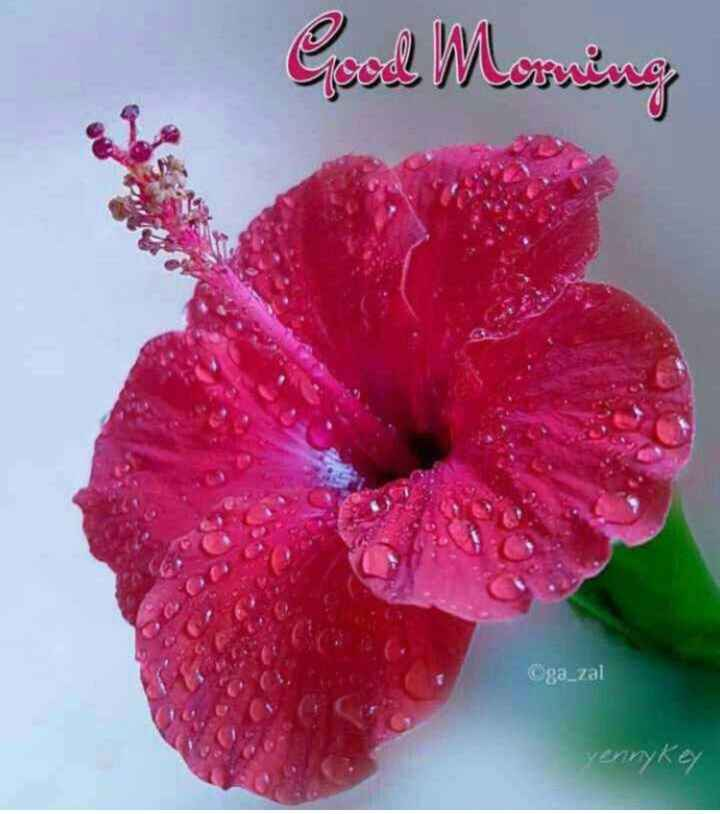 🌅శుభోదయం - Good Morning ga _ zal - ShareChat