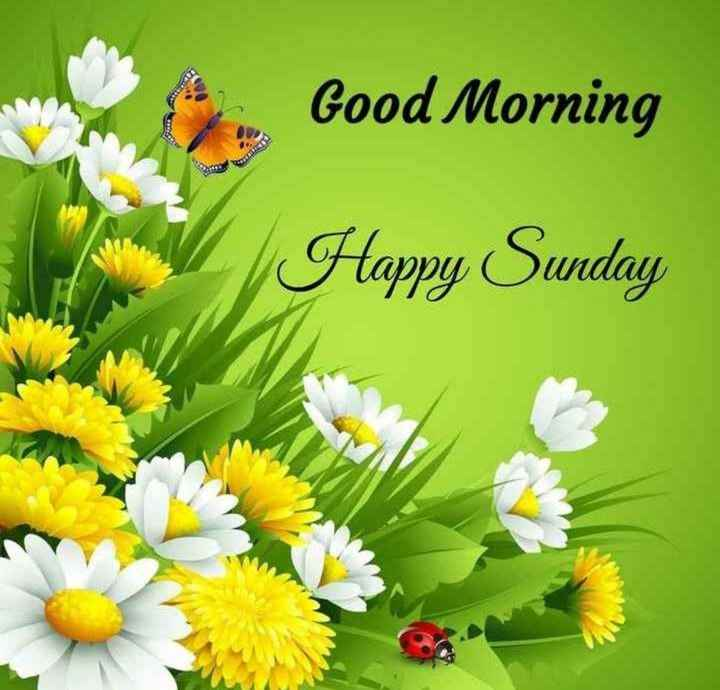 🌅శుభోదయం - Good Morning Happy Sunday - ShareChat