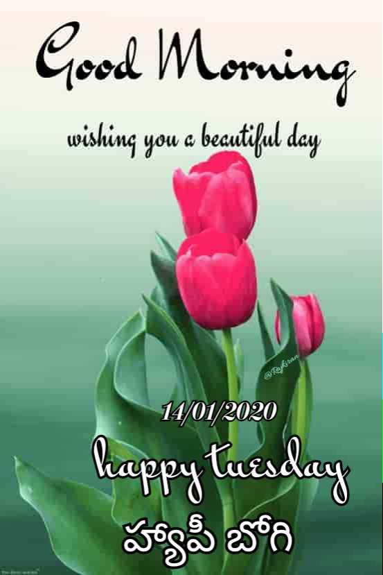 🌅శుభోదయం - Good Morning wishing you a becutiful day @ raytan 14 / 01 / 2020 Cappy tuesday హ్యాపీ బోగి - ShareChat