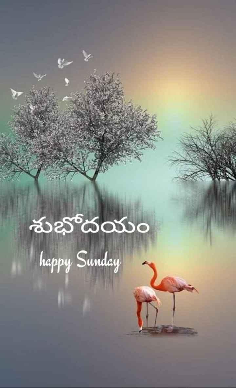 🌅శుభోదయం - శుభోదయం Whappy Sunday - ShareChat