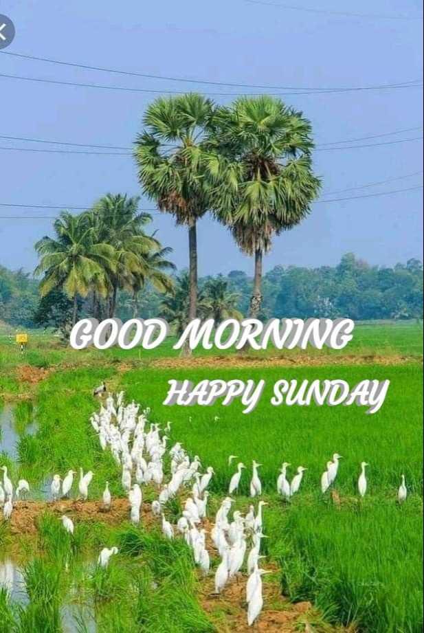 🌅శుభోదయం - GOOD MORNING HAPPY SUNDAY Waris - ShareChat