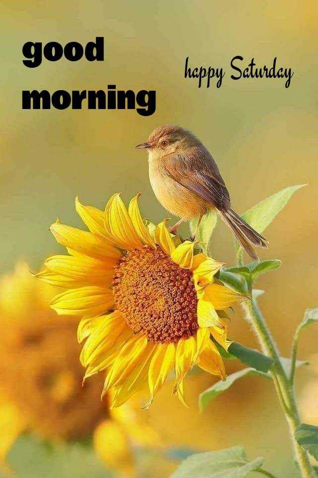 🌅శుభోదయం - good morning happy Saturday - ShareChat