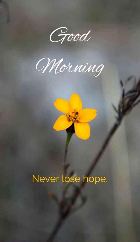 🌅శుభోదయం - Good Morning Never lose hope . - ShareChat