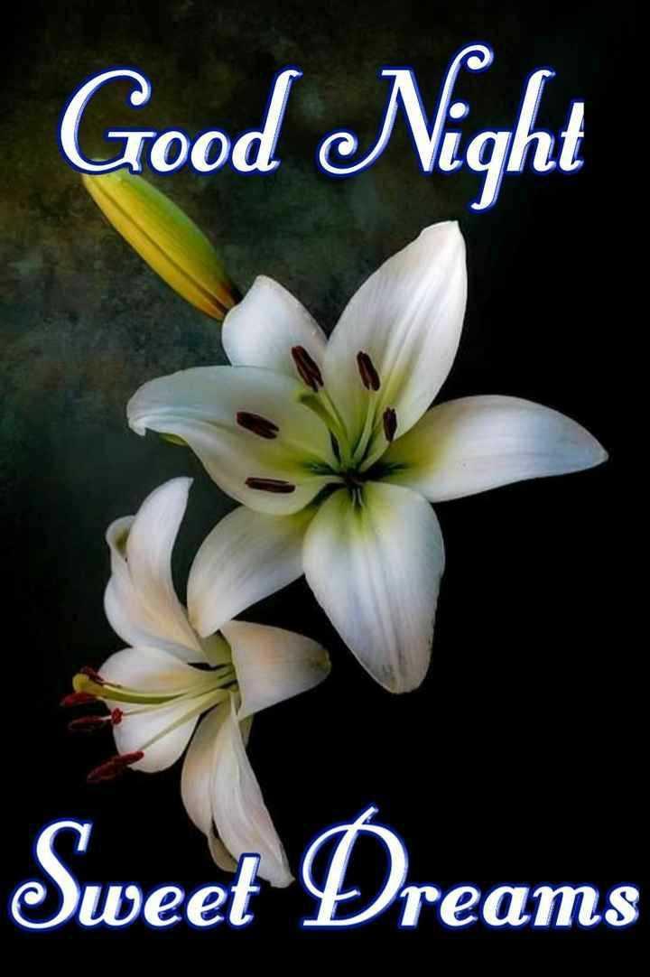 🕐 ಶುಭ ಮಧ್ಯಾಹ್ನ - Good Night Sweet Dreams - ShareChat