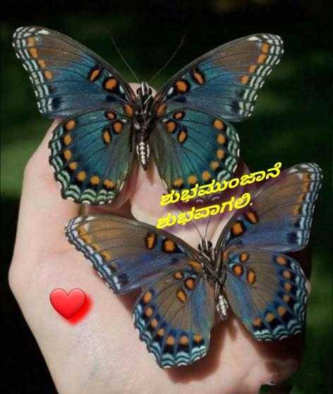 ಶುಭಮುಂಜಾನೆ - ಶುಭಮುಂಜಾನೆ ಶುರವಾಗಲಿ , - ShareChat