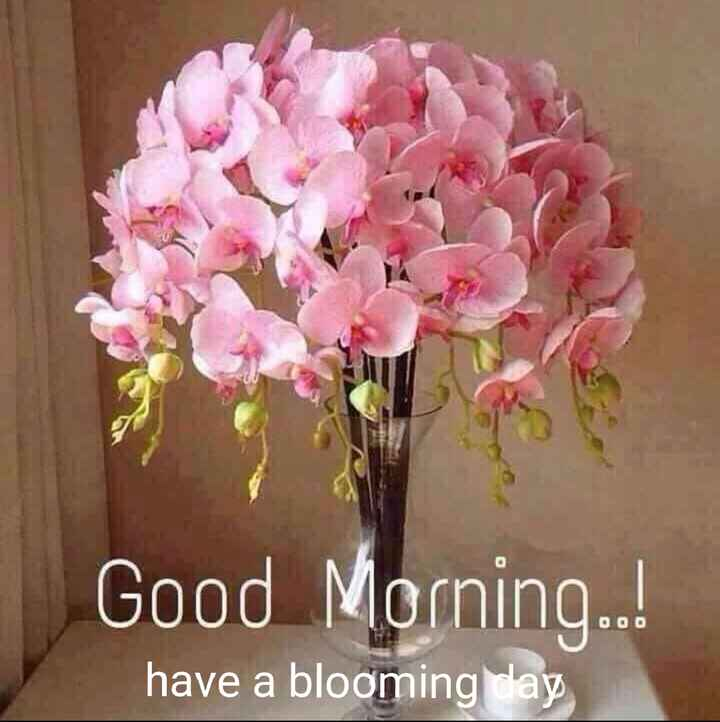 🌅ಶುಭೋದಯ - Good Morning . . ! DOO have a blooming way - ShareChat