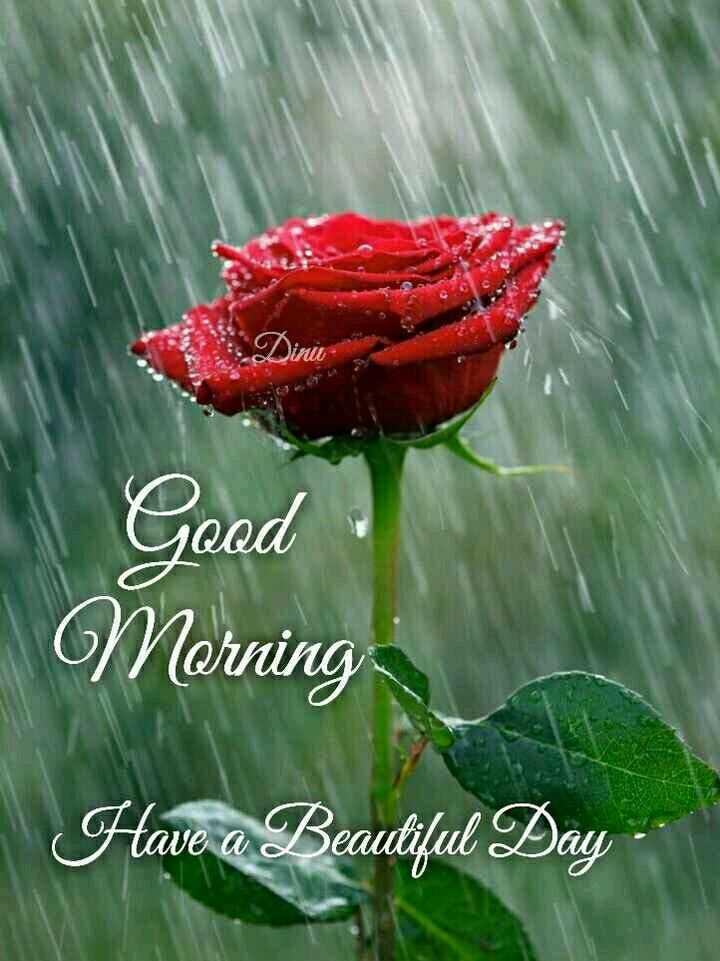 🌅ಶುಭೋದಯ - Good Morning Have a Beautiful Day - ShareChat