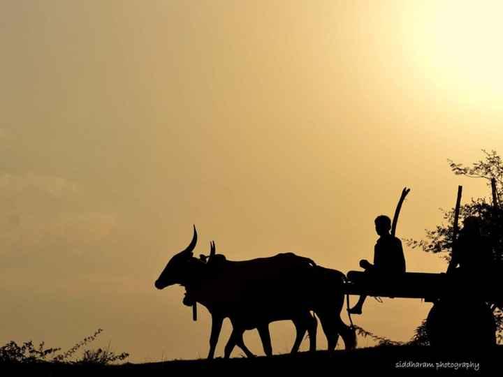 🌅ಶುಭೋದಯ - siddharam photography - ShareChat