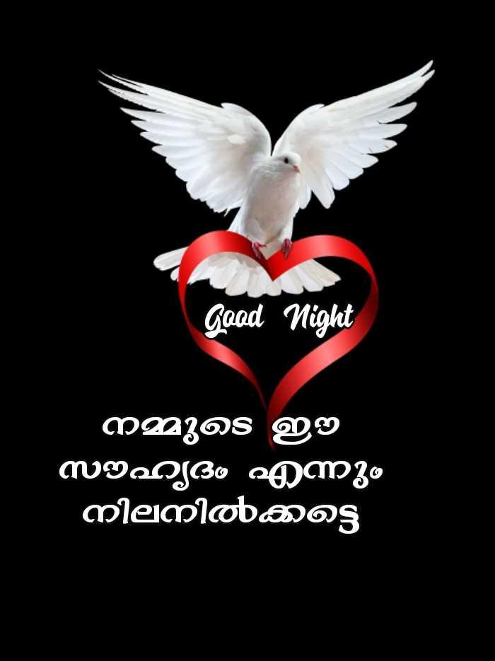 🌃 ഗുഡ് നൈറ്റ് - Good Night ' നമ്മുടെ ഇ സൗഹ്യദം എന്നും ' നിലനിൽക്കട്ടെ - ShareChat