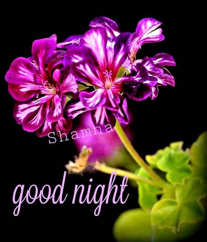 🌃 ഗുഡ് നൈറ്റ് - Shamna good night - ShareChat