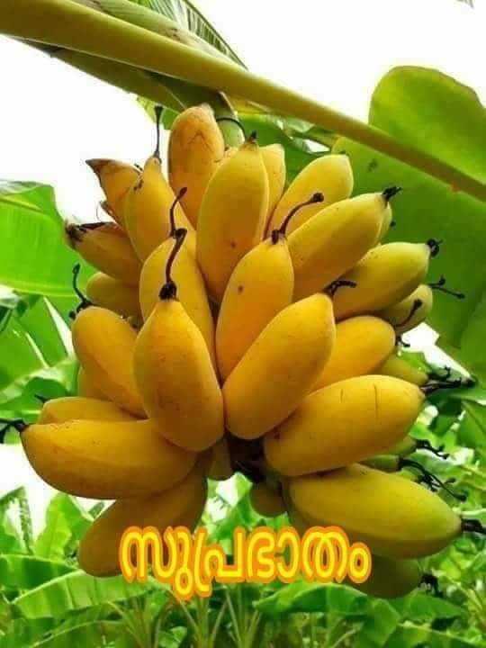 🌞 ഗുഡ് മോണിംഗ് - | സിപിഭാതം - ShareChat