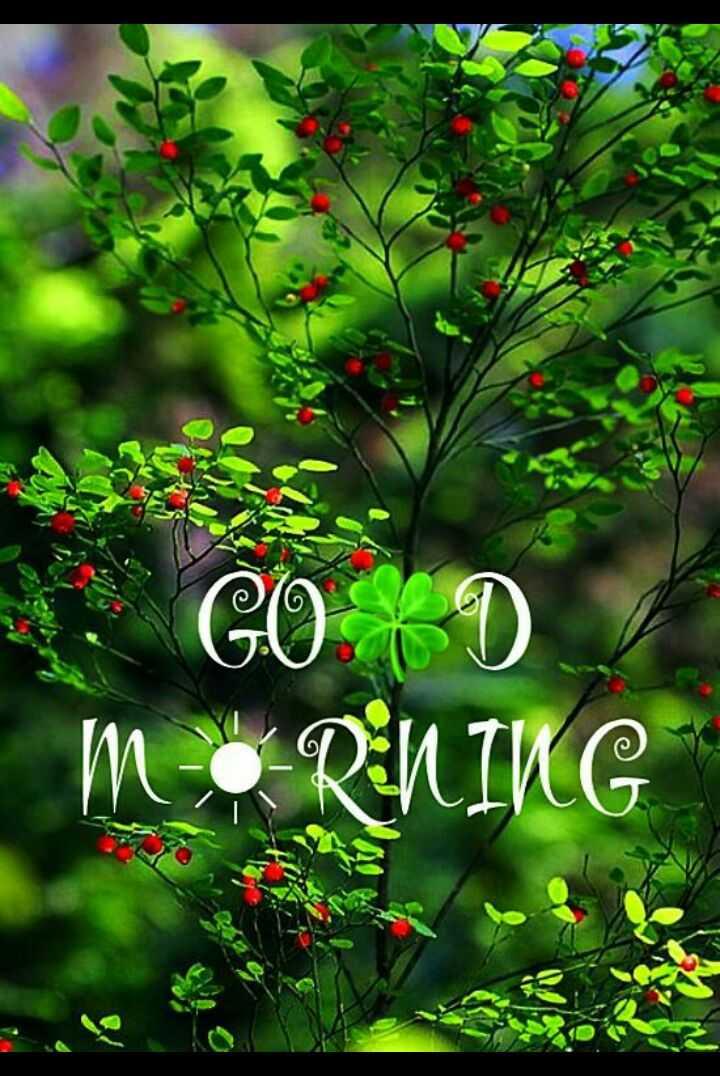 🌞 ഗുഡ് മോണിംഗ് - . GO m•RNIKG - ShareChat