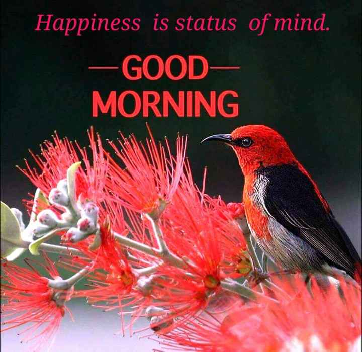 🌞 ഗുഡ് മോണിംഗ് - Happiness is status of mind . - GOOD MORNING - ShareChat
