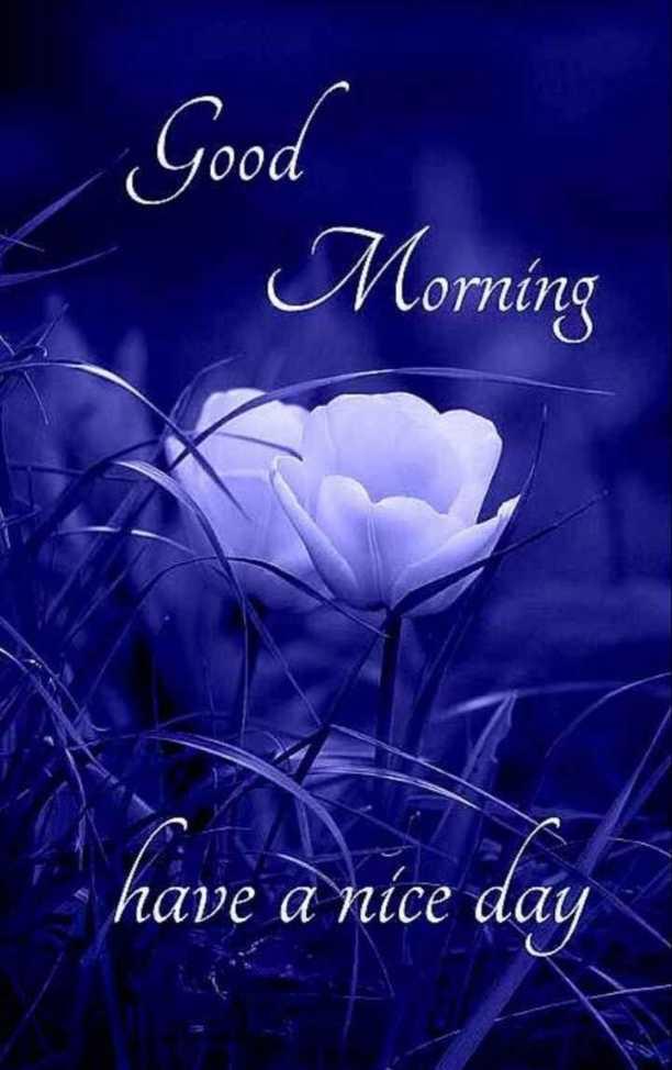 🌞 ഗുഡ് മോണിംഗ് - Good Morning 5 . have a nice day - ShareChat
