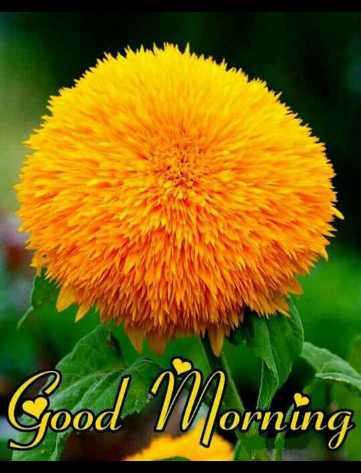 🌞 ഗുഡ് മോണിംഗ് - Good m VVorning - ShareChat
