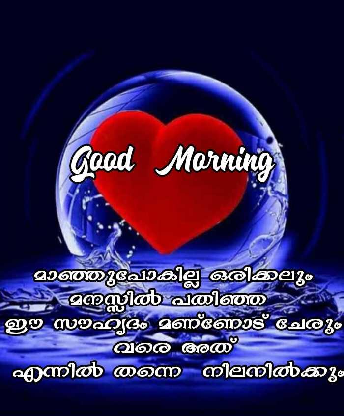 🌞 ഗുഡ് മോണിംഗ് - Good Morning - - - - മാഞ്ഞുപോകില്ല ഒരിക്കലും മനസ്സിൽ പതിഞ്ഞ സൗഹ്യദം മണ്ണോട് ചേരും വരെ അത് എന്നിൽ തന്നെ നിലനിൽക്കും - ShareChat